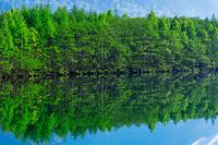 長野県 新緑の大正池
