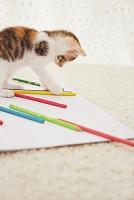 子猫と色鉛筆