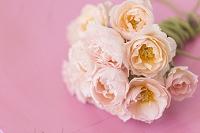 ピンクの背景にバラの花束