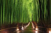 京都府 嵐山花灯路 竹林の小径ライトアップ