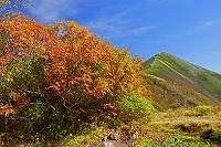 長野県 秋の爺ケ岳