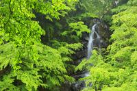 山梨県 釜沢の滝と新緑
