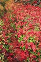 京都府 水路と散り紅葉