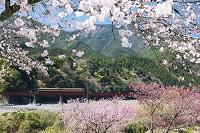 静岡県 大井川鉄道