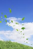 草原に舞い散る葉っぱ