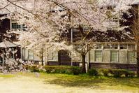 桜と木造校舎