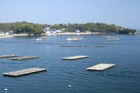 兵庫県 室津の牡蠣筏