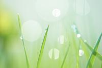 朝露の植物