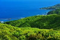 北海道 離島最北のブナ林