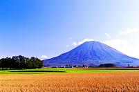 北海道 豆畑と午後の羊蹄山