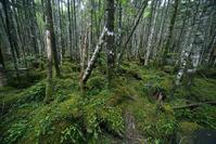 長野県 林床が苔に覆われた森