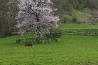 北海道 サラブレッドの子馬