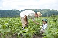 畑の中の父と女の子