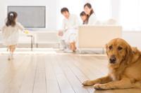 犬と赤ちゃんを見守る日本人家族
