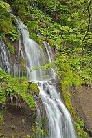 山梨県 春の吐竜ノ滝