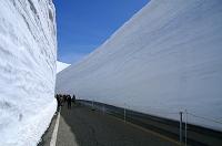 富山県 立山町 雪壁