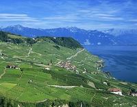 スイス ラヴォーのブドウ段々畑とレマン湖
