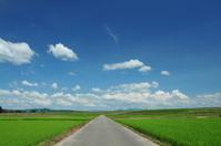 新潟県 田園