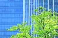 東京都 丸の内 若葉とビルのガラス