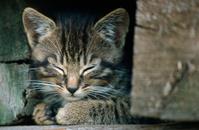 壁の隙間に隠れて寝ている子猫
