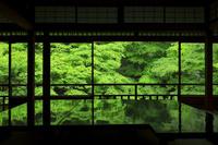 京都府 瑠璃光院 書院から見る新緑の楓