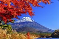 山梨県 精進湖 紅葉と富士山