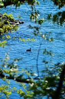 新緑の頃 薫風吹く 長良川