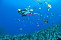鹿児島県 熱帯魚とダイバーとサンゴ