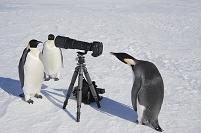 写真を撮るペンギン