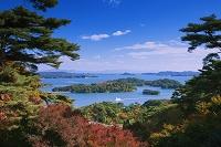 宮城県 紅葉と松島