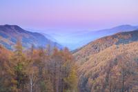 長野県 分杭峠より高遠方向の山並みと紅葉のカラマツ林の夕景