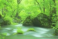 青森県 奥入瀬 九十九島 新緑と流れ