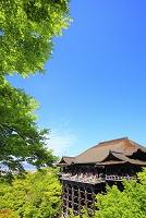 京都府 清水寺 新緑の本堂舞台と青空