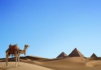 エジプト ピラミッドのある砂漠にラクダ