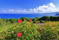 沖縄県 玉取崎展望台のハイビスカス