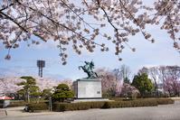 山形県 霞城公園 最上義光騎馬像とサクラ