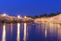 青森県 弘前市 弘前公園の夜桜