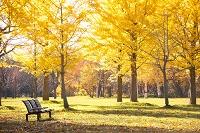 北海道 公園とベンチ