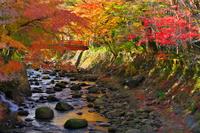 静岡県 修善寺温泉街の紅葉