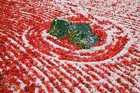 宮城県 紅葉の円通院庭園