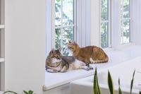 窓辺で寛ぐ2匹の猫