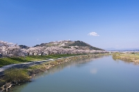 白石川堤一目千本桜と船岡城址公園