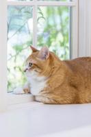 窓辺から遠くを見る猫