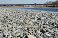 多摩川下流 内側の河原