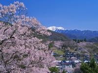 長野県 タカトオコヒガンザクラ咲く高遠城址公園と南アルプス