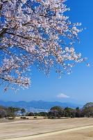 静岡県 桜咲く日本平より富士山