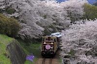 群馬県 わたらせ渓谷鉄道と桜