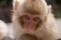 長野県 子猿