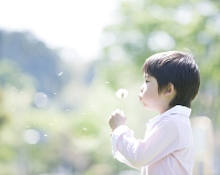 綿毛を吹く日本人の男の子