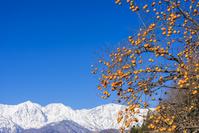 長野県 白馬村 柿と白馬三山